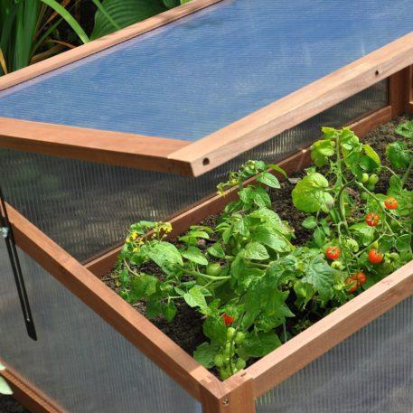 Broeikas Sweet Tomato geschikt voor vroeg kweken in de grond