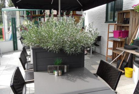 een rustig kleur beplanting in je rechthoekige plantenbak