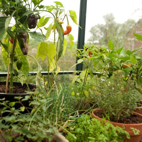 Ga jij de Atrium benutten voor het kweken?
