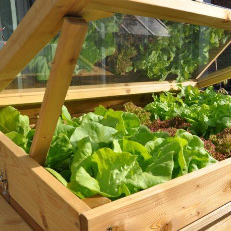 Lekker je groente kweken in de grower on wheels